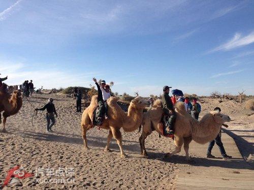 胡杨沙漠骆驼_胡杨沙漠骆驼简笔画