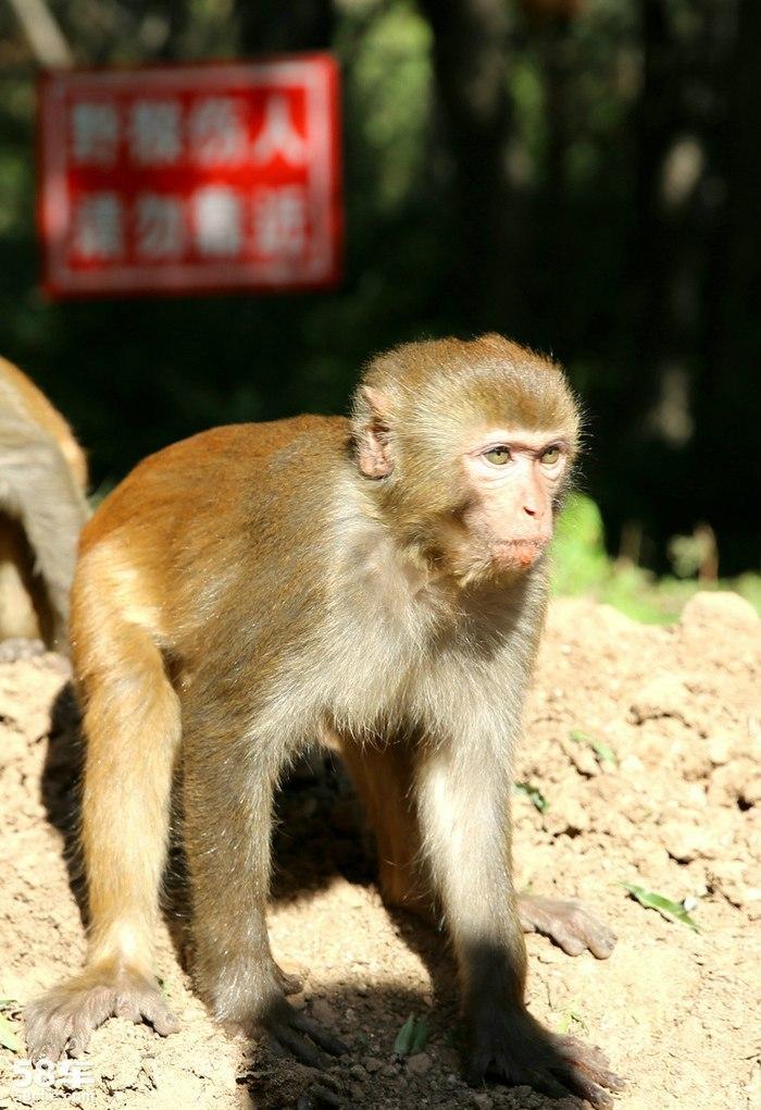 """猴年话猴--八达岭野生动物园邂逅灵动机敏的""""猴子""""_欢"""